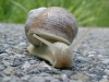 Photo d'un escargot