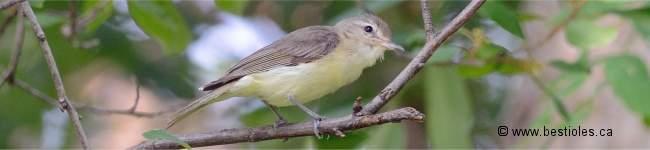 Liste des oiseaux, insectes et mammifères pour V