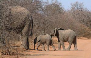 Photo d'un bébé éléphant