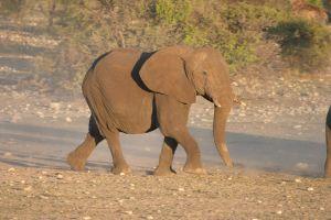 Photo d'un éléphanteau