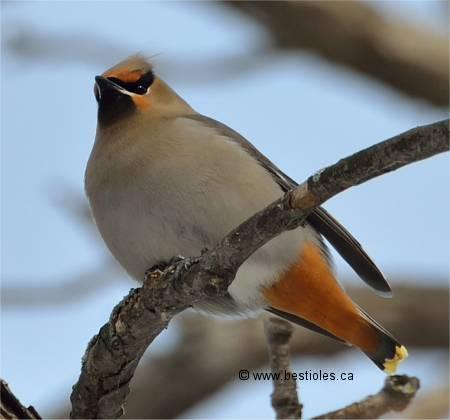 Les oiseaux passereaux for Oiseau par la couleur